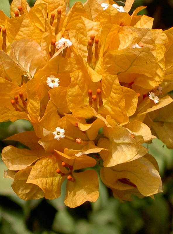 A propos - Africa Blooming